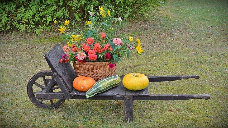 Le zucche e le rudbeckie frutti e fiori d'autunno