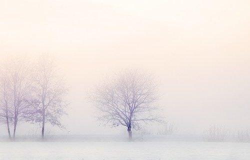 alberi in dicembre